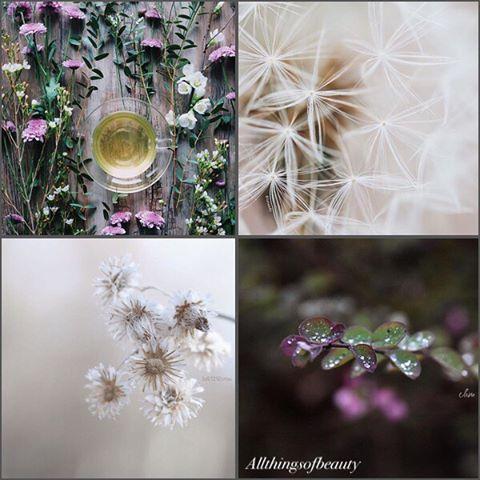 severelymagicalthings.com/magical-fleurs/
