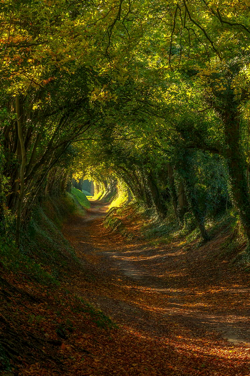 severelymagicalthings/tunnel-of-magic/