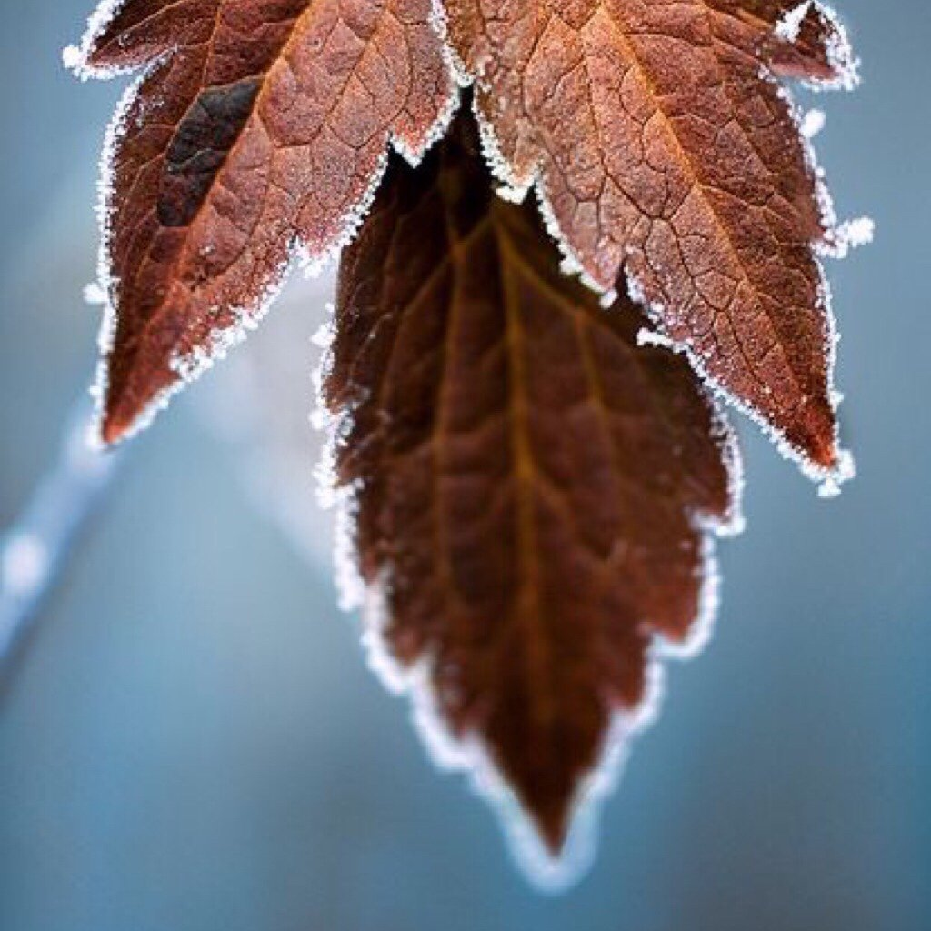 severelymagicalthings.com/a-touch-of-frost-photo/
